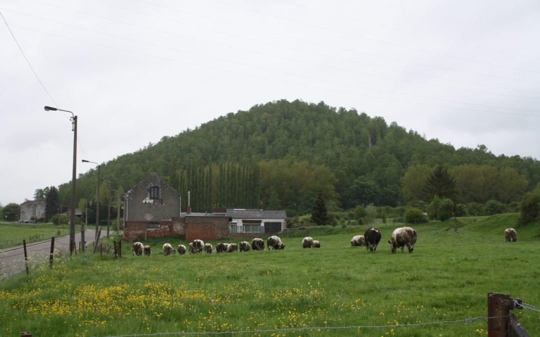 PROGRAMME pour une Ville verte